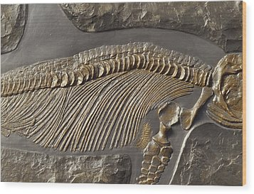 The Ribs And Spine Of Ichthyosaur Wood Print by Jason Edwards