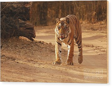 The Royal Bengal Tiger Wood Print by Fotosas Photography
