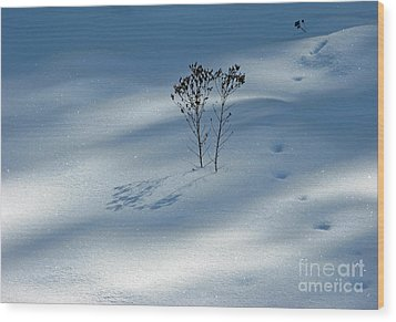 Wood Print featuring the photograph The Shadow Of Loneliness by Ausra Huntington nee Paulauskaite