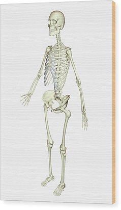 The Skeletal System Wood Print by MedicalRF.com