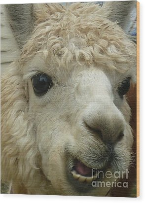The Smiling Alpaca Wood Print
