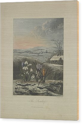 The Snowdrop Wood Print by Robert John Thornton