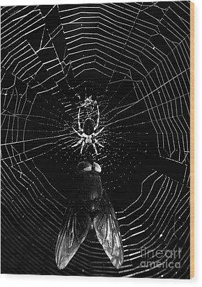 The Spider And The Fly . Black And White Wood Print by Wingsdomain Art and Photography