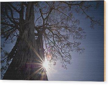 The Sunlight Shines Behind A Tree Trunk Wood Print by David DuChemin