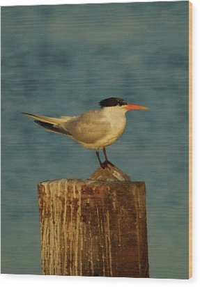 The Tern Wood Print by Ernie Echols