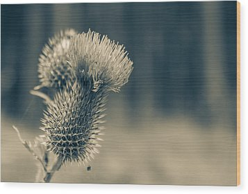 The Thistle Wood Print by Andreas Levi