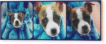 The Three Amigos Teacup Chihuahua Wood Print by Peggy Franz