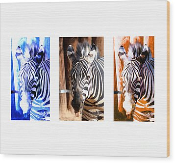 Wood Print featuring the photograph The Three Zebras White Borders by Rebecca Margraf