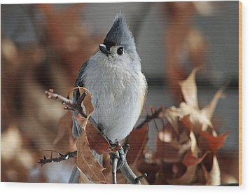Wood Print featuring the photograph The Titmouse by Mike Martin