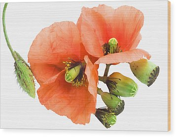 Wood Print featuring the photograph The Torn Off Poppy. The Broken Life. by Aleksandr Volkov
