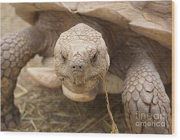 The Tortoise  Wood Print by J Jaiam