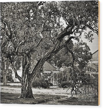 The Tree Which Moves ... Wood Print by Gwyn Newcombe