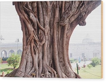 The Twisted And Gnarled Stump And Stem Of A Large Tree Inside The Qutub Minar Compound Wood Print by Ashish Agarwal