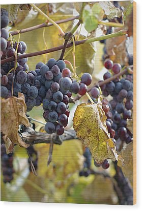 Wood Print featuring the photograph The Vineyard by Linda Mishler