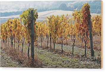 The Vineyard Wood Print by Margaret Hood