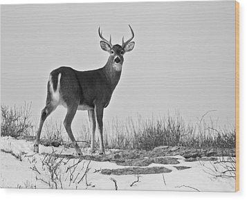 Wood Print featuring the photograph The Watching Deer by Nancy De Flon