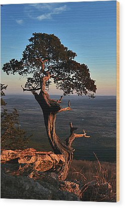 The Weathered Watcher Wood Print by Jeff Rose