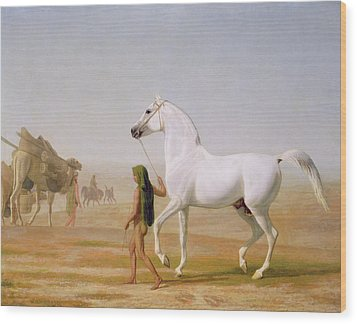 The Wellesley Grey Arabian Led Through The Desert Wood Print by Jacques-Laurent Agasse