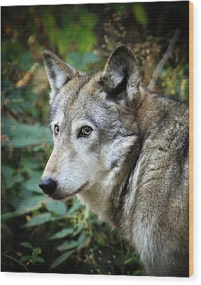 Wood Print featuring the photograph The Wolf by Steve McKinzie