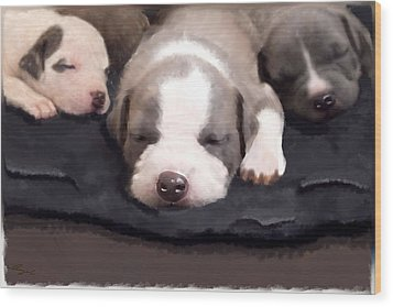 They Call It Puppy Love Wood Print by Angel Pachkowski