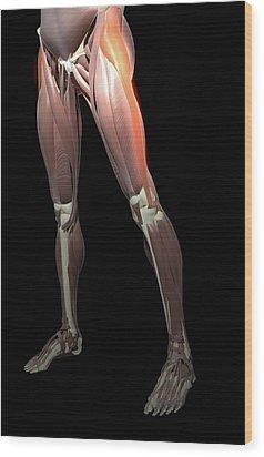 Thigh/lower Limb Abduction Wood Print by MedicalRF.com