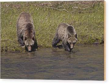 Wood Print featuring the photograph Thirsty Grizzlies by J L Woody Wooden