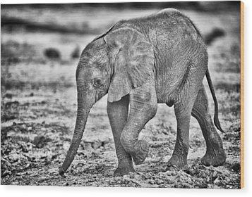 This Is Botswana No.  6 - Wait Up Mother Wood Print by Paul W Sharpe Aka Wizard of Wonders