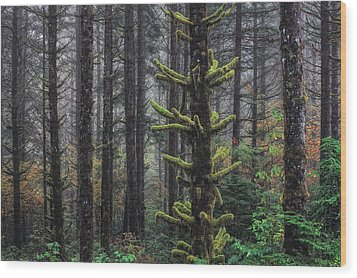 This Is British Columbia No.54f - Misty Mystical Moss Forest IIi Wood Print by Paul W Sharpe Aka Wizard of Wonders