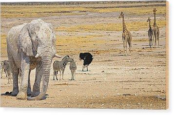 This Is Namibia No. 10 - Etosha White African Elephant  Wood Print by Paul W Sharpe Aka Wizard of Wonders