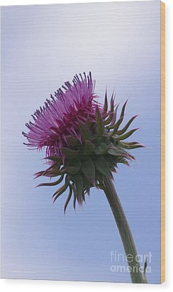 Thistle 1 Wood Print by Tannis  Baldwin