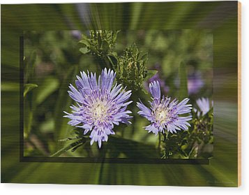 Thistle 131 Wood Print by Charles Warren