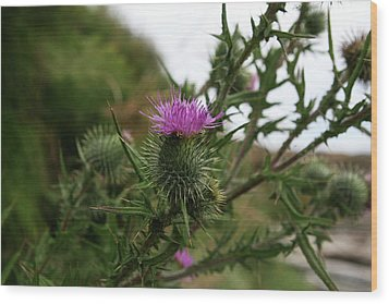 Wood Print featuring the photograph Thistle Bloom by Lorraine Devon Wilke
