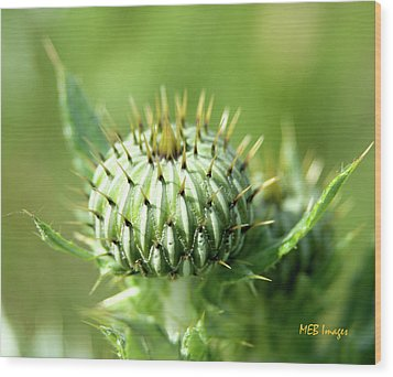 Thistle Bud Wood Print