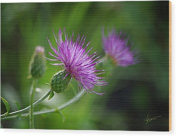 Wood Print featuring the photograph Thistle Dance by Vicki Pelham