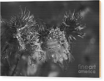 Thistle Seeds Wood Print