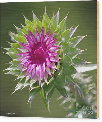 Thistle  Wood Print by Tannis  Baldwin