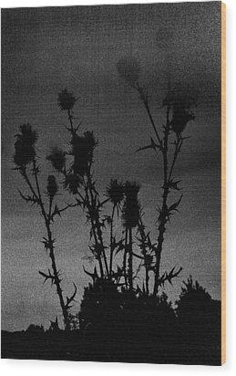 Thistles Wood Print by Hakon Soreide