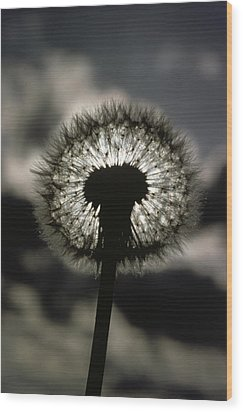 Thoreau Called A Dandelion A Complete Wood Print by Farrell Grehan