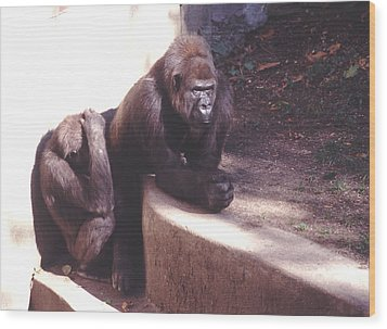 Wood Print featuring the photograph Thoughtful Gorilla With Child by Tom Wurl