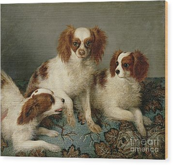 Three Cavalier King Charles Spaniels On A Rug Wood Print by English School