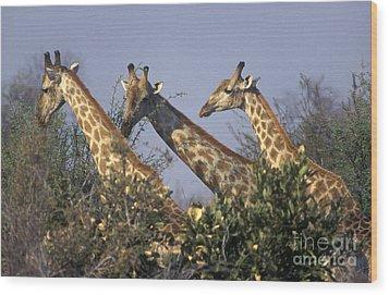 Wood Print featuring the photograph Three Friends - Savuti Marsh Botswana by Craig Lovell