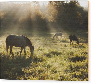 Three Horse Sunrise Wood Print by Ron  McGinnis