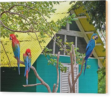 Wood Print featuring the photograph Three Parrots by Ann Murphy