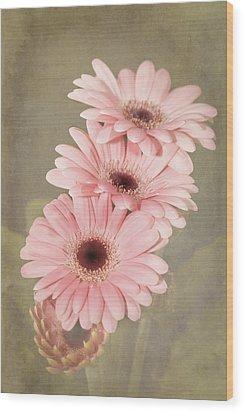 Three Pink Gerberas Wood Print by Fiona Messenger