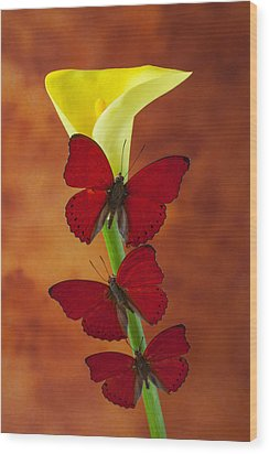 Three Red Butterflies On Calla Lily Wood Print by Garry Gay