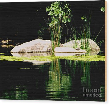 Three Rocks And A Turtle Wood Print by Maria Scarfone