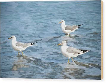Three Seagulls Wood Print by Kathy Gibbons