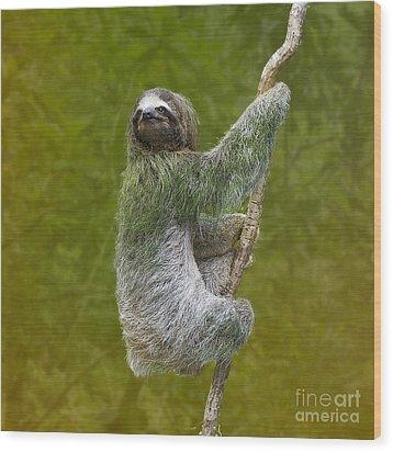 Three-toed Sloth Climbing Wood Print by Heiko Koehrer-Wagner