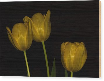 Wood Print featuring the photograph Three Tulips by Ed Gleichman