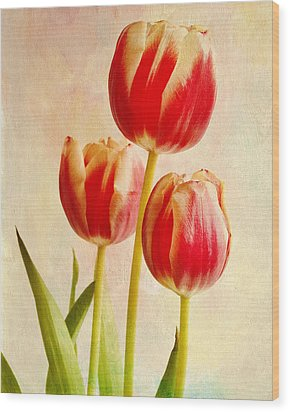 Wood Print featuring the photograph Three Tulips by James Bethanis